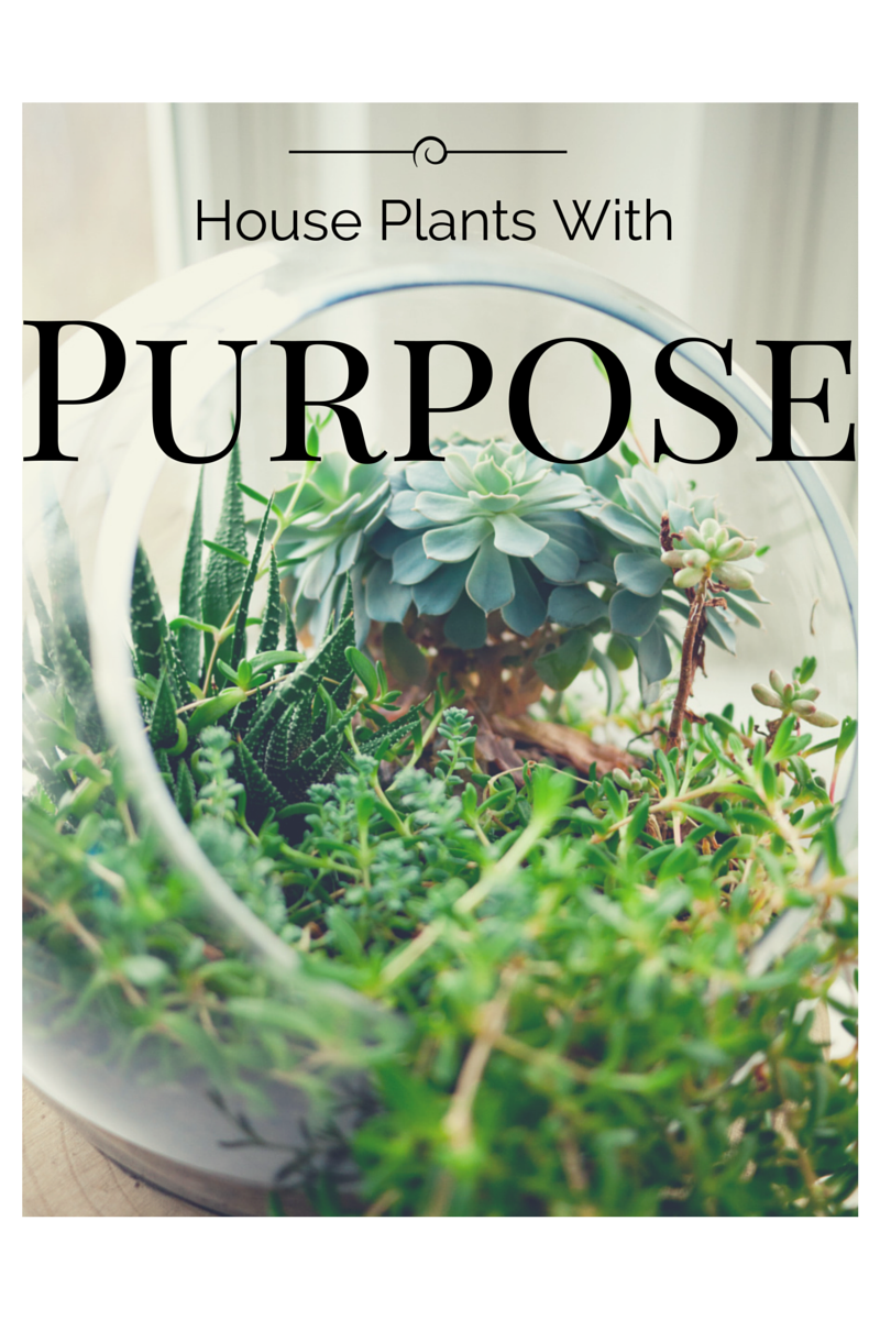 House Plants With