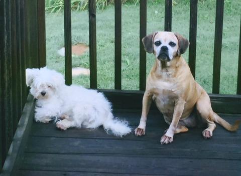 Mac and Gracie