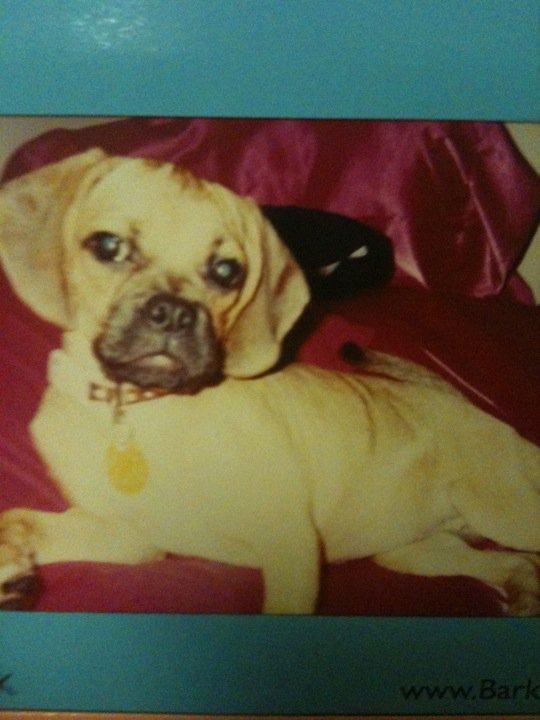Gracie Puppy